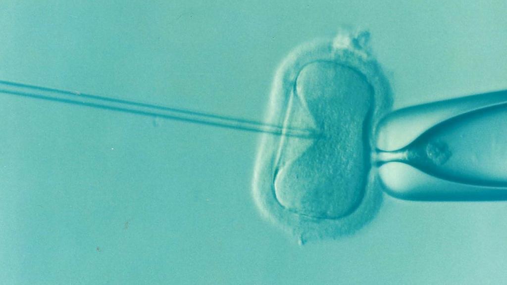 fertilizacao-in-vitro-orientacao-psicologica-online-motivacao-terapia-de-casal