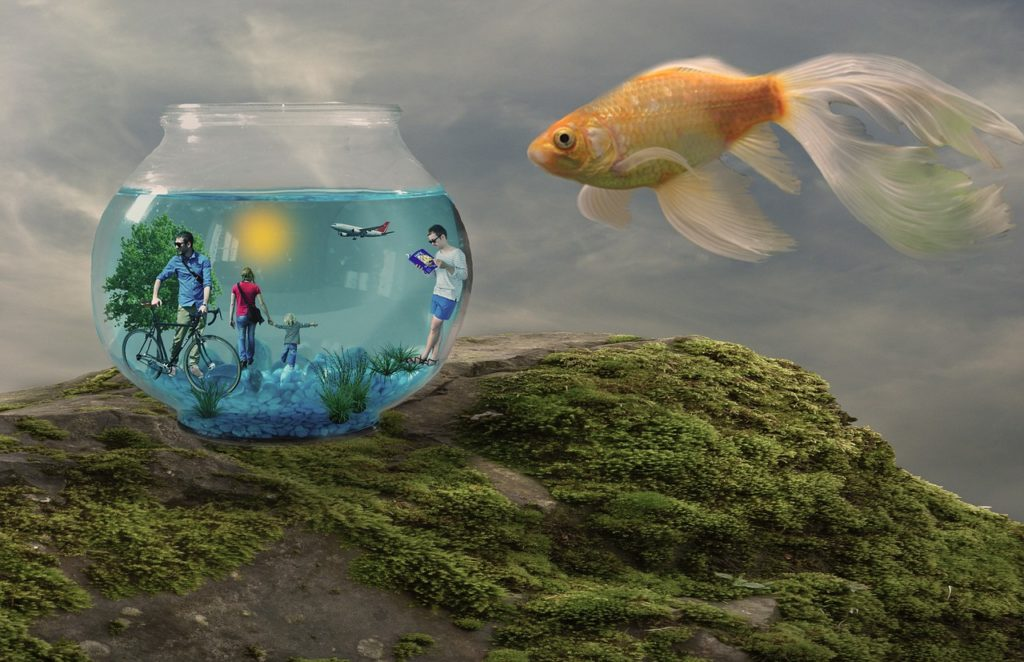 peixe-pixote-autoconhecimento-psicologa-online