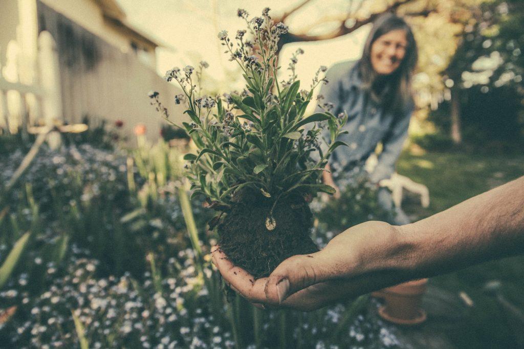 5-ingredientes-de-um-relacionamento-saudavel-e-duradouro-psicologa-online-terapia-de-casal-videosessao